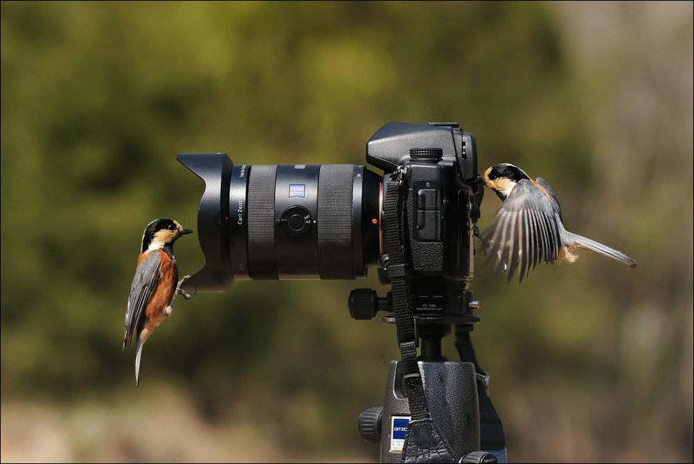 дома как фотографировать птицу для такой комнаты