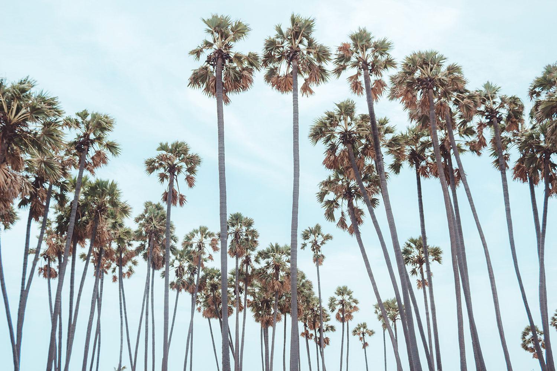 palm-trees-bg