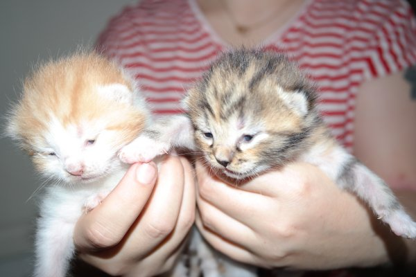 dl.dropboxusercontent.com/s/pmbcuxq5aqyx01e/Kittens%20picture%203.jpg