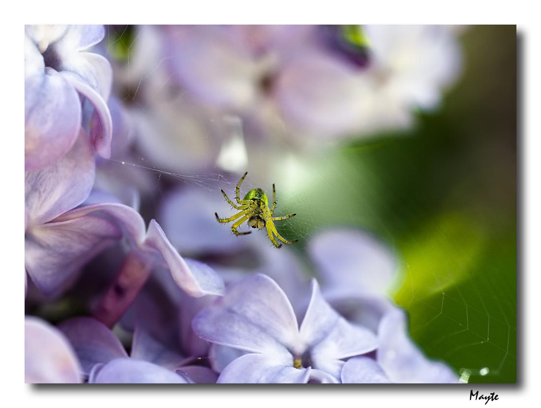 10.- Macro:<br />May15 &quot;Tejiendo entre lilas&quot;