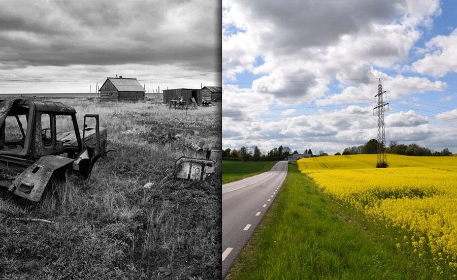 Объясняю, почему при заброшенных полях России они выглядят цветущими