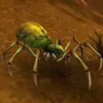 Hrobní lovící pavouk