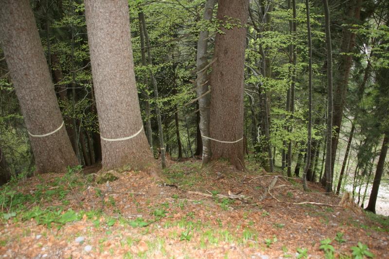 Tatort Wald Tatort Wald