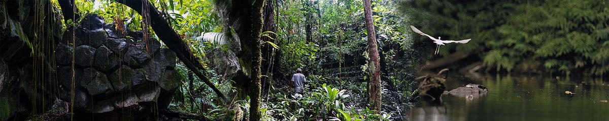 Indio-Maiz Biological Reserve