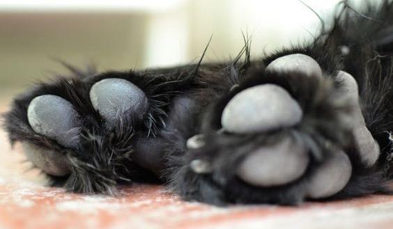 Peluquería canina: Vaciado de plantares