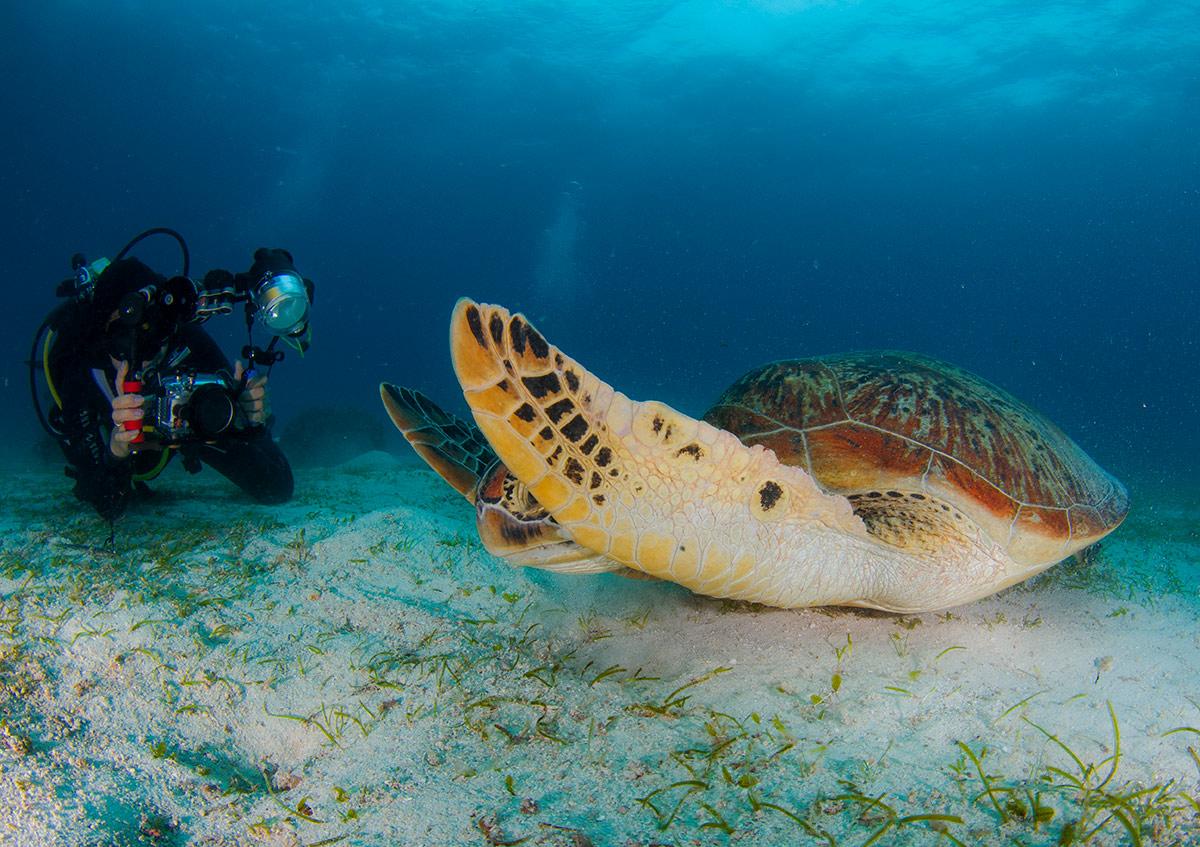 2018. Филиппины. Баликасаг. Джеки и черепахи. Баликасаг, дайверов, Остров, джеков, глубины, практически, самой, снизу, черепах, манит, поверхности, множество, огромная, мелководье, добраться, чтобы, корней, травы, Искренне, песок