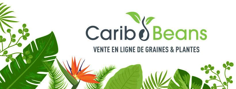Carib Beans GP