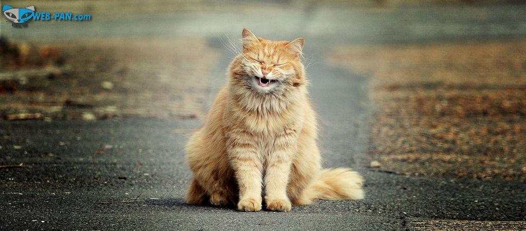 Пятница настала, котики радуются, но работы просто Валом, не разгрести, тружусь не покладая рук!