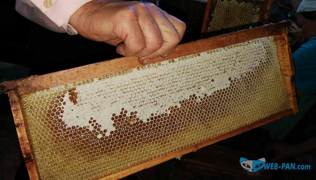 Качаем пчелиный медок, вкусный и свежий, очень натуральный, можно его окупить в Минске и Стрешине (Жлобине)!