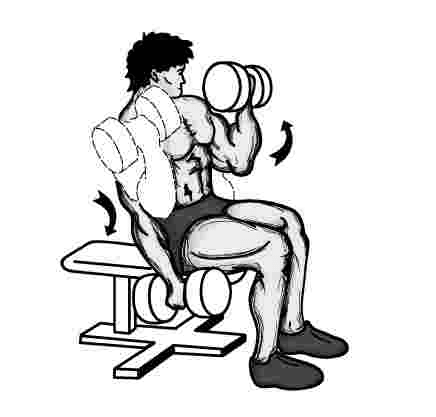 Seated Dumbbell Curls - Build and Shape Biceps