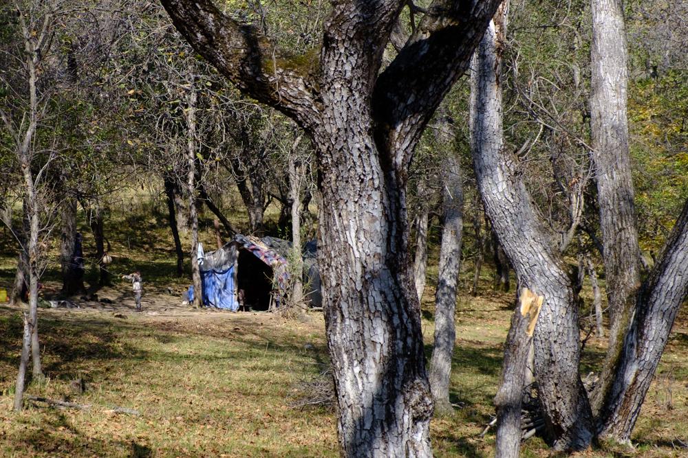 Tijdens de notenoogst wonen sommige gezinnen in het bos in tenten.