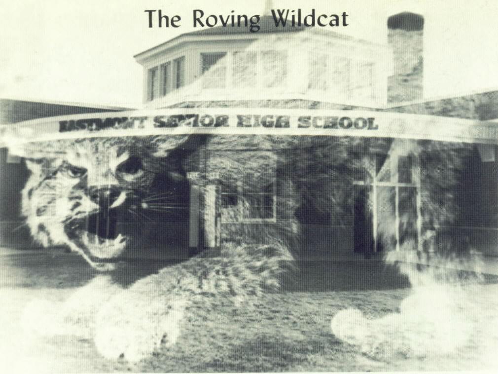 Roving Wildcat