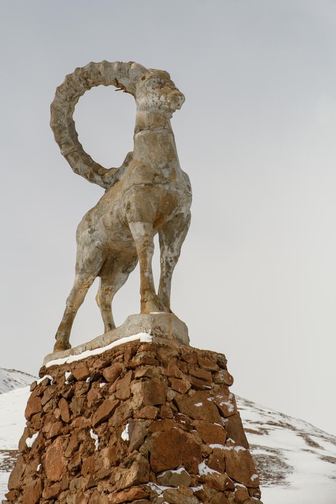 marco polo schapen
