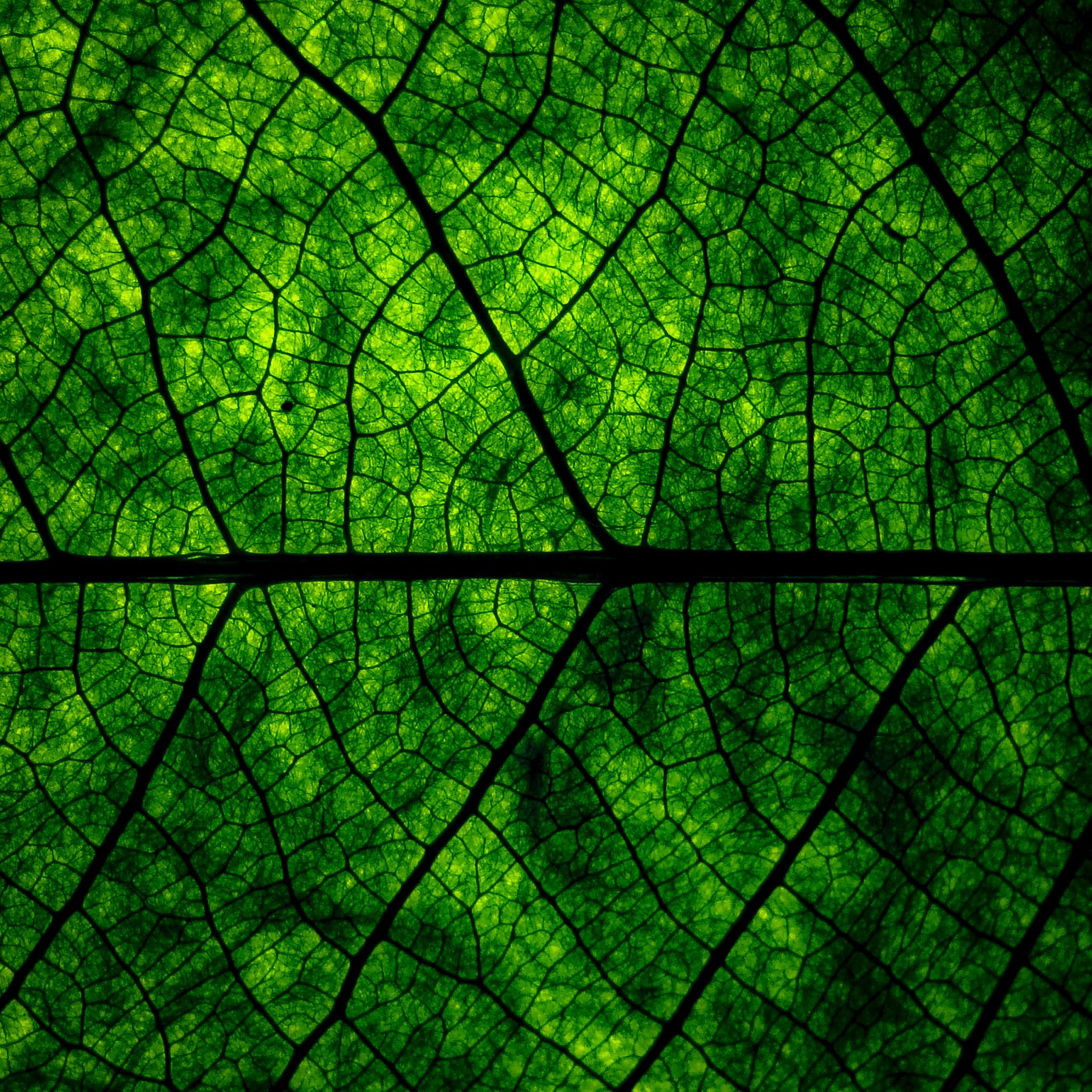 ★ Leaf Veins by @RetinaiPadWalls on twitter.jpg