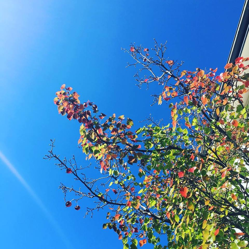 Blue sky, autumn fall leaves