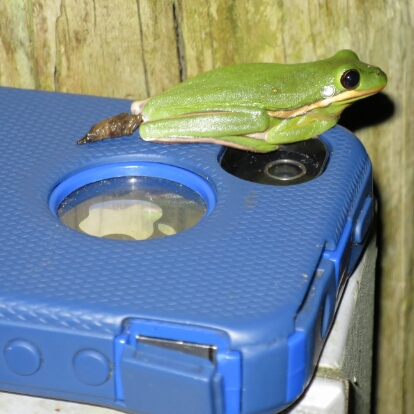 Frog leaving calling card