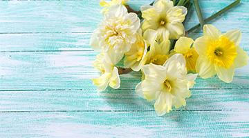 專利成分Dormin-水仙花,象徵著完美與自戀!