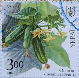 2016 огурцы 3.00