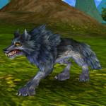 Ochočený vlk