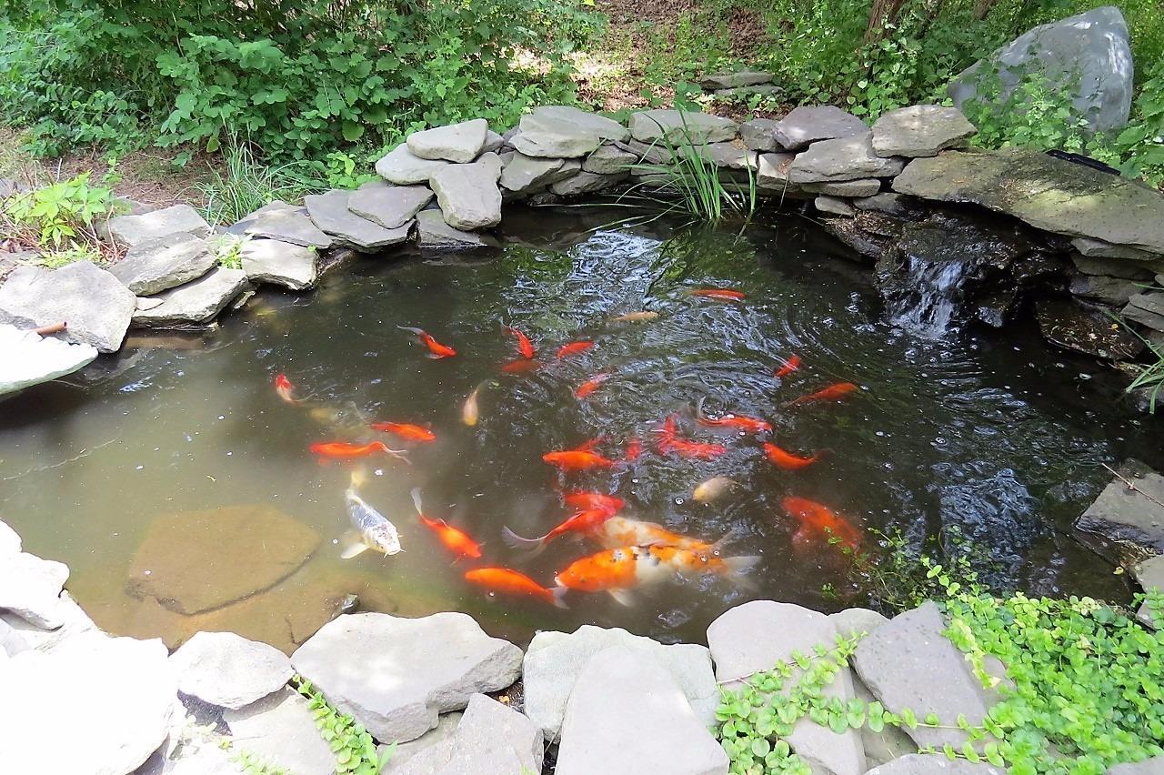 4 Rabbit Run Koi Pond