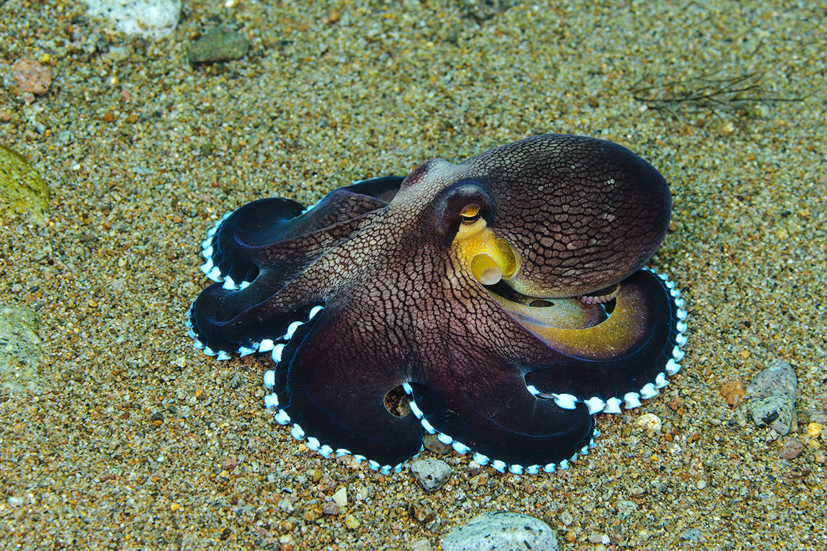 2018. Филиппины. Негрос. Кокосовые осьминоги и прочие морские твари.