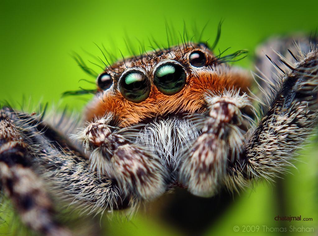 صور حشرات غريبة عجيبة 2013 | سبحان الخالق - صور حشرات