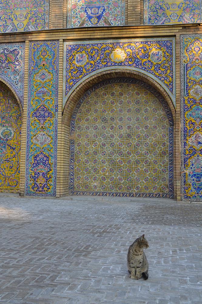 Met dank aan de Insta-cat die vriendelijk wou poseren voor de typisch Perzische mozaiekmuren