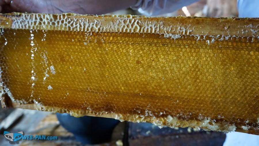 Катаем мёд в деревне, фотографирую там нашу пасеку для размещения информации в сети!
