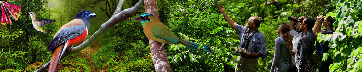 Montibelli Nature Reserve