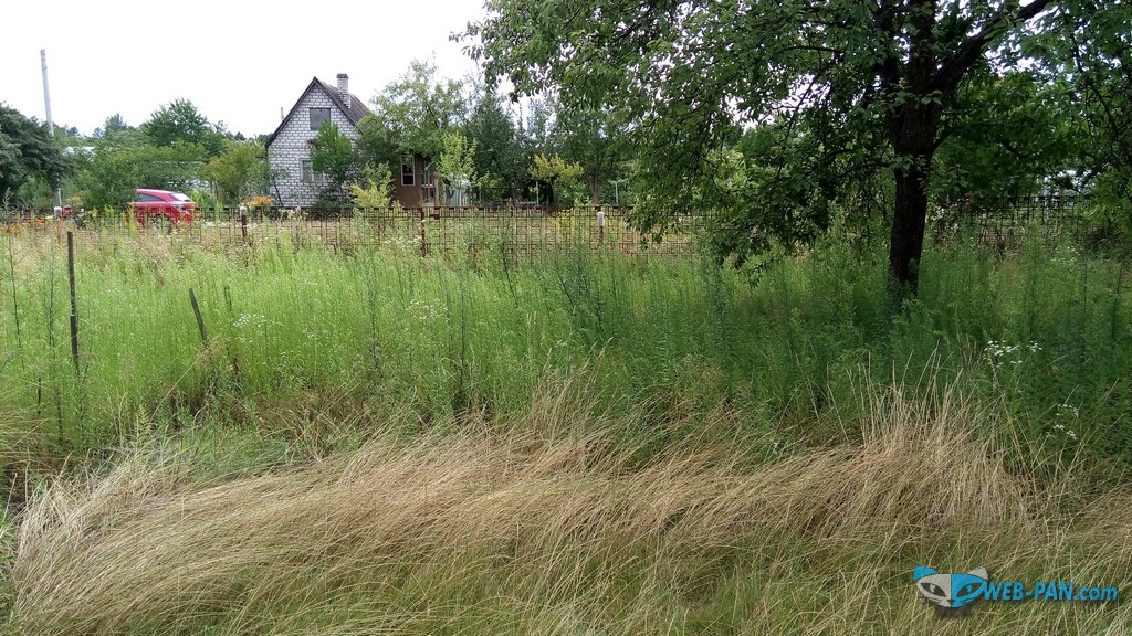 Газонная трава побуяла, никто не косит, нет времени!