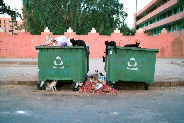 Streunender Katzen in Marrakesch, Katzen Müll